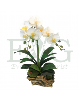 Orchid Phalaenopsis (Artificial)